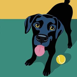 Pet Friendly Apartments - Newton, MA